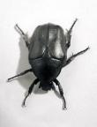 beetle_02