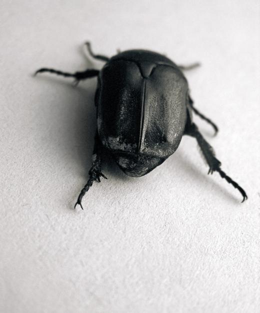 beetle_03