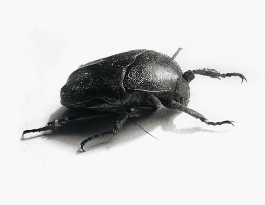 beetle_05