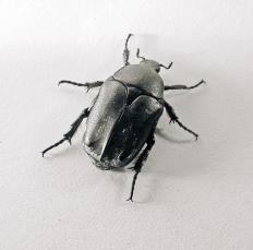 beetle_06