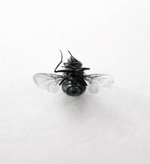 fly_00