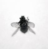 fly_01a