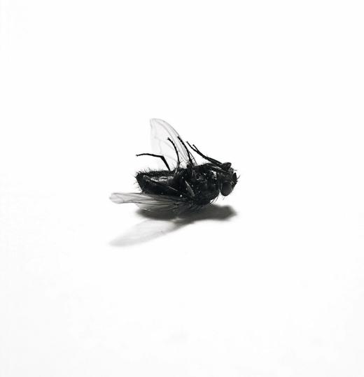 Texture-Fabrik-fly_02