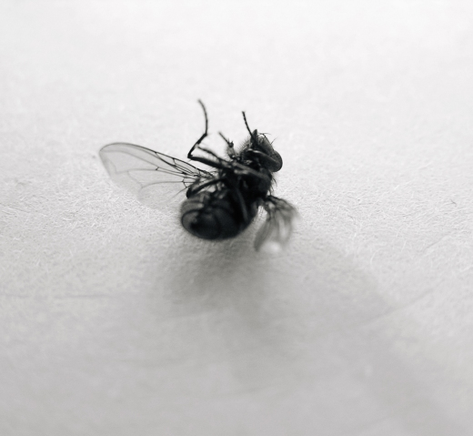 Texture-Fabrik-fly_04