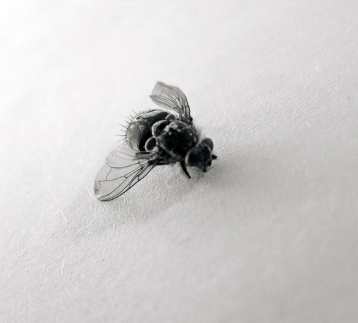 Texture-Fabrik-fly_05