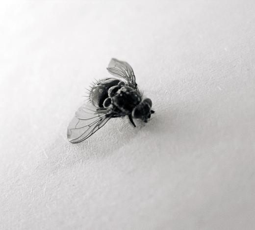 fly_05