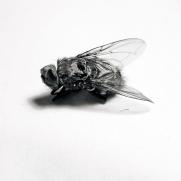 fly_06