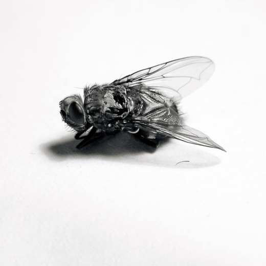 Texture-Fabrik-fly_06