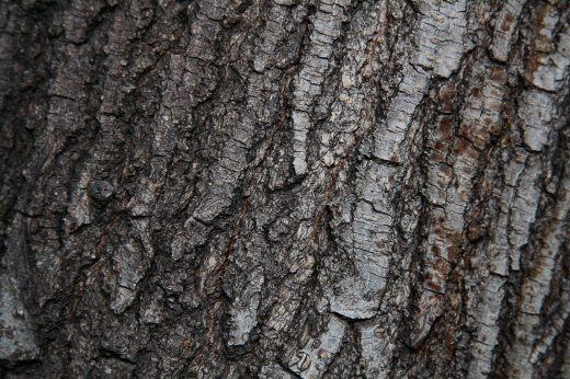 Wooden_Trunk_01
