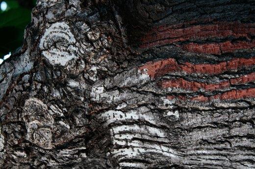 Wooden_Trunk_02