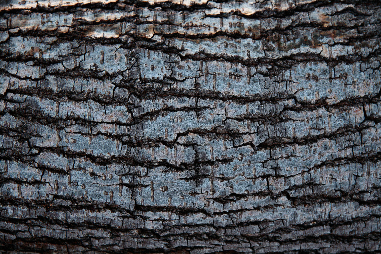 17 Tree Trunk Textures   Texture Fabrik