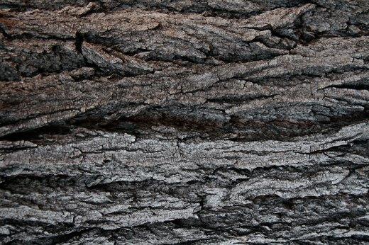 Wooden_Trunk_04