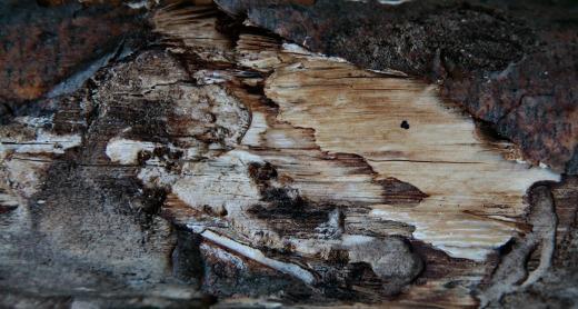Wooden_Trunk_05