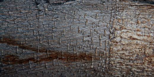 Wooden_Trunk_05a