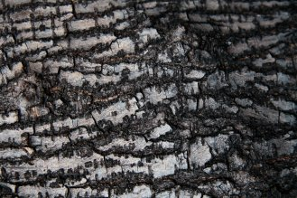 Wooden_Trunk_07