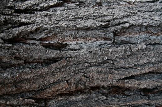 Wooden_Trunk_08