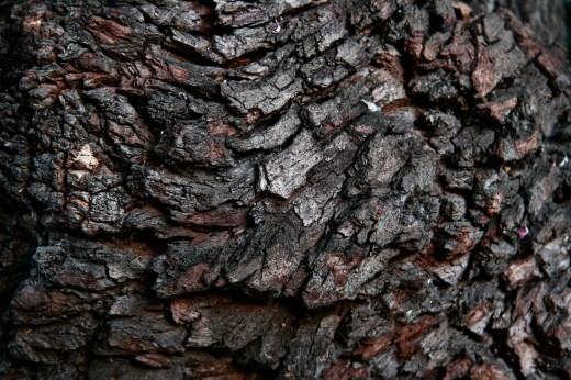 Wooden_Trunk_09