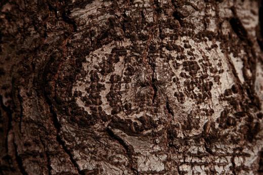 Wooden_Trunk_12