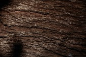 Wooden_Trunk_15