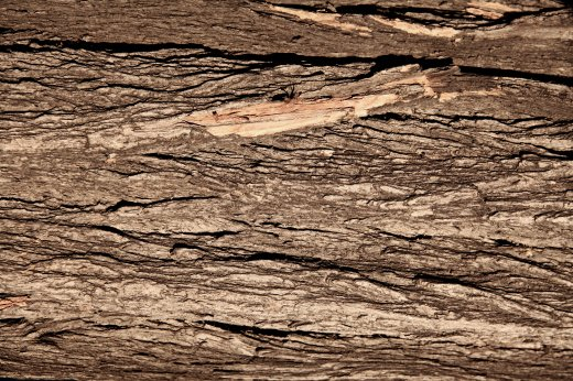 Wooden_Trunk_16