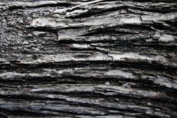 Wooden_Trunk_17