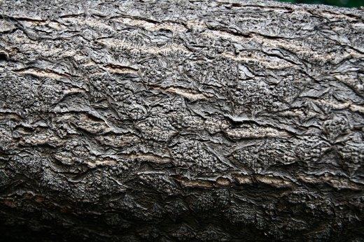 Wooden_Trunk_18