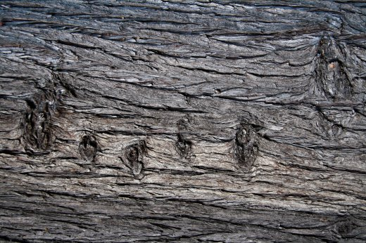 Wooden_Trunk_22