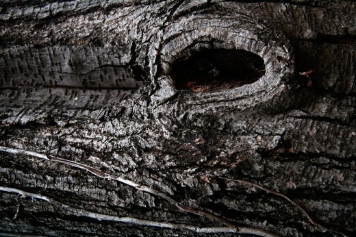 Wooden_Trunk_24
