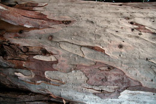 Wooden_Trunk_30