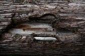 Wooden_Trunk_33