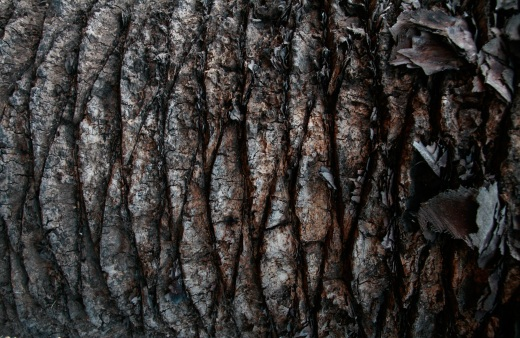 Wooden_Trunk_35