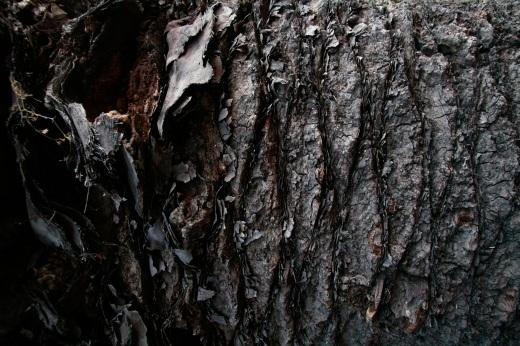 Wooden_Trunk_36
