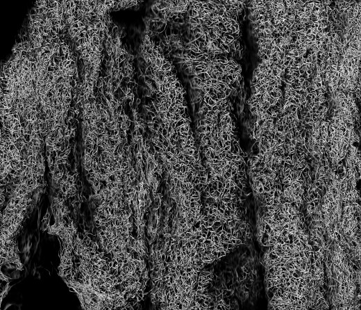 Texture Fabrik Luffa Textures