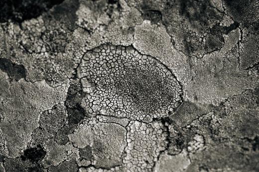 Texure Fabrik Moss