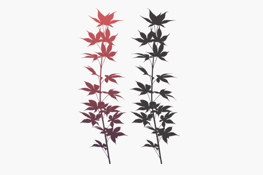 Japanese maple silhouette graphic