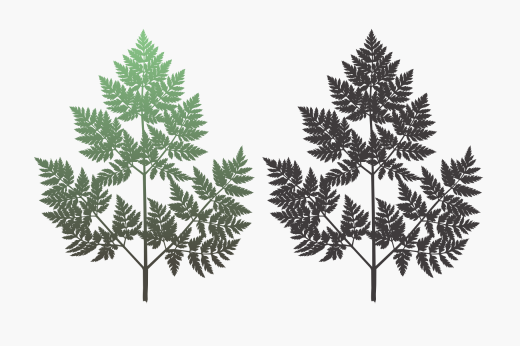 Fern-like graphic design of Conium plant