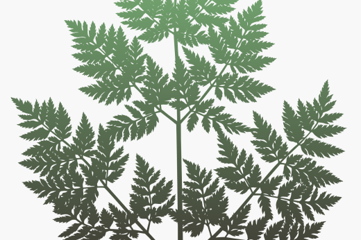 Detail of Conium plant silhouette design