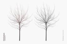 Texture Fabrik - Herbarium: Tree Vector No.27